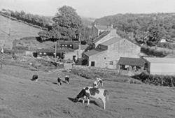 View of Lanehead farm and Millhouses